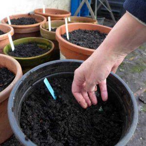 Firm down soil