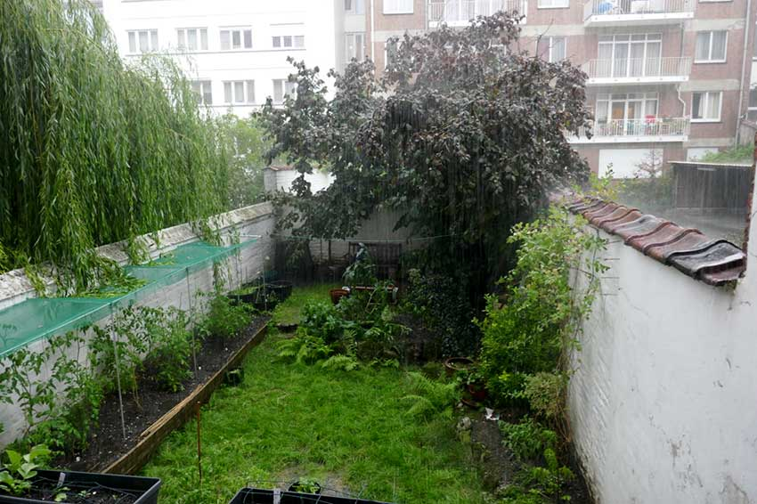 The garden viewed from balcony with a downpour in progress