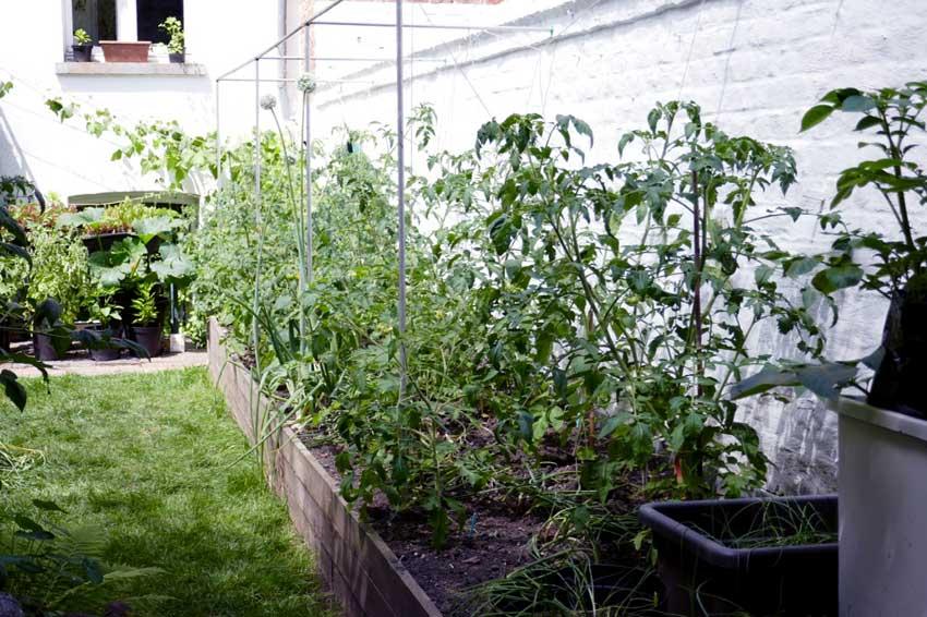 Heat wave gardening