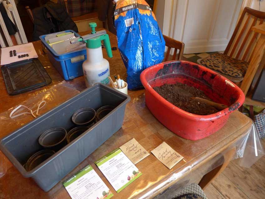 Kitchen table gardening