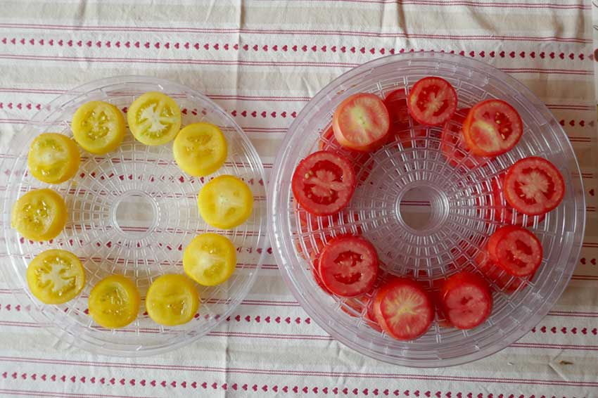 Kitchen time - tomatoes in a dehydrator