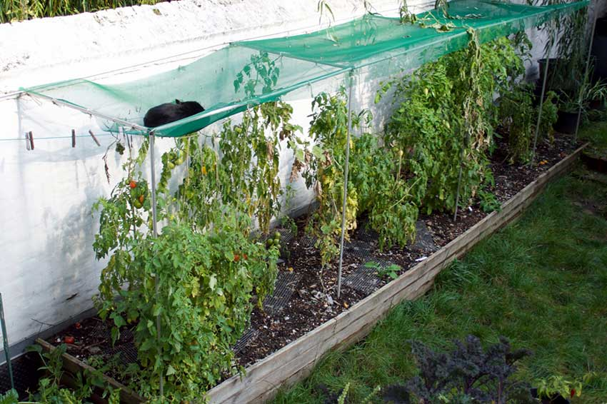 Raised bed with netting