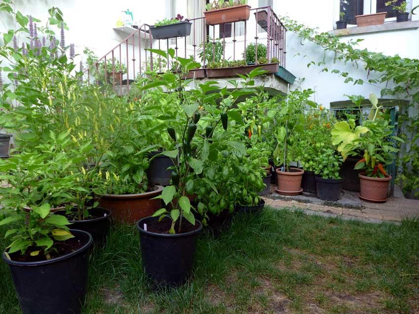 Recycling potting soil