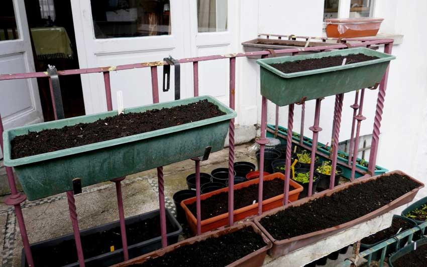 Starting spring salad