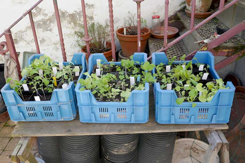 Young seedling plants in containers