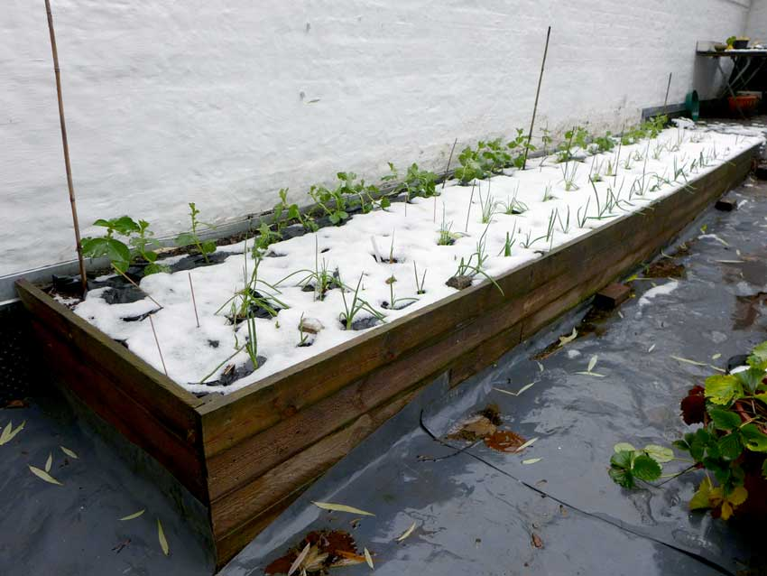 Winter raised bed