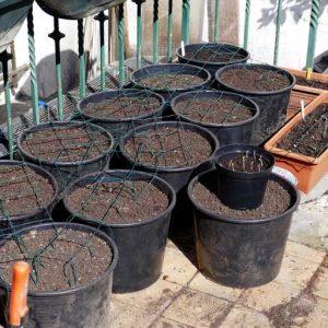 Prepared pots