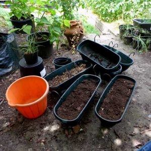 Soil from pots and trays