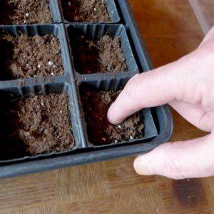Fingernail depth