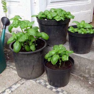 Mixed pots