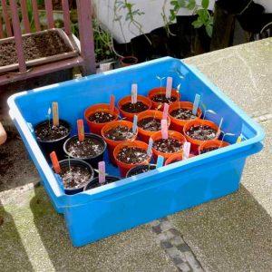 Portable seedlings