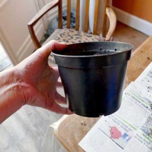 2lt starter pots