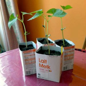 Pot up to milk cartons