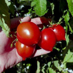 Kron Prints fruits