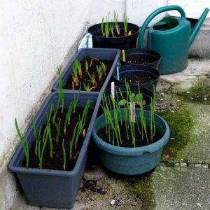 Start in pots