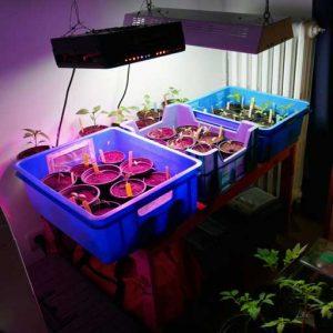 Oncoming seedlings