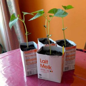 Potted up to milk cartons
