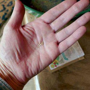 Smaller seeds