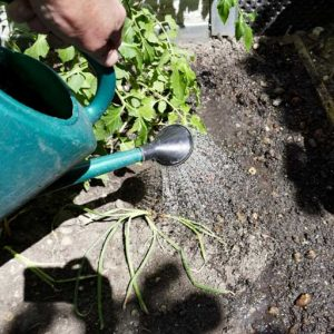 Soak before mulching