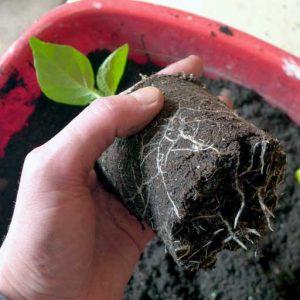 Examine roots