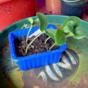 Mini propagation