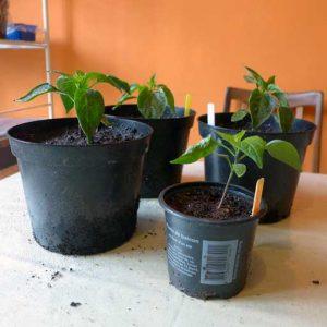 Next size pots