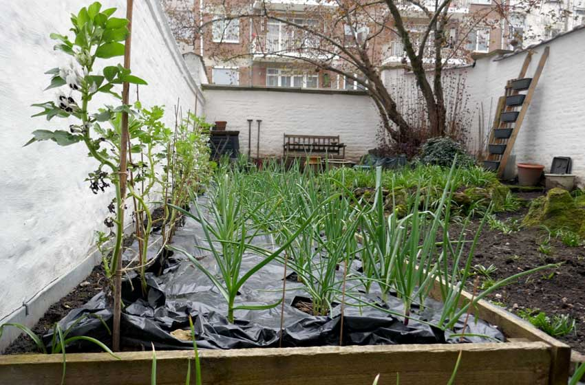 Busy raised bed