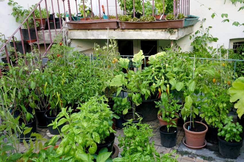 Happy container gardening