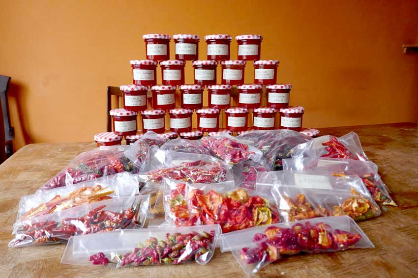 Chilli jam stacked in jars with plastic bags full of dried chillis sit in front