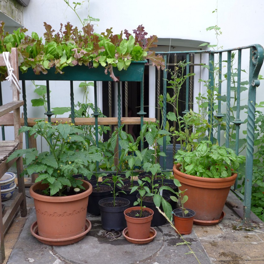 Mixed garden containers