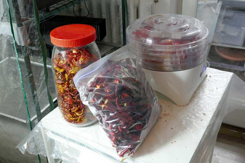Dried chillies & tomatoes