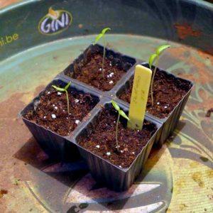 Seedlings in modules