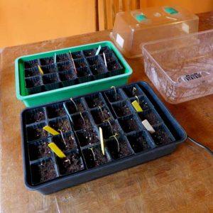 Seedlings appear