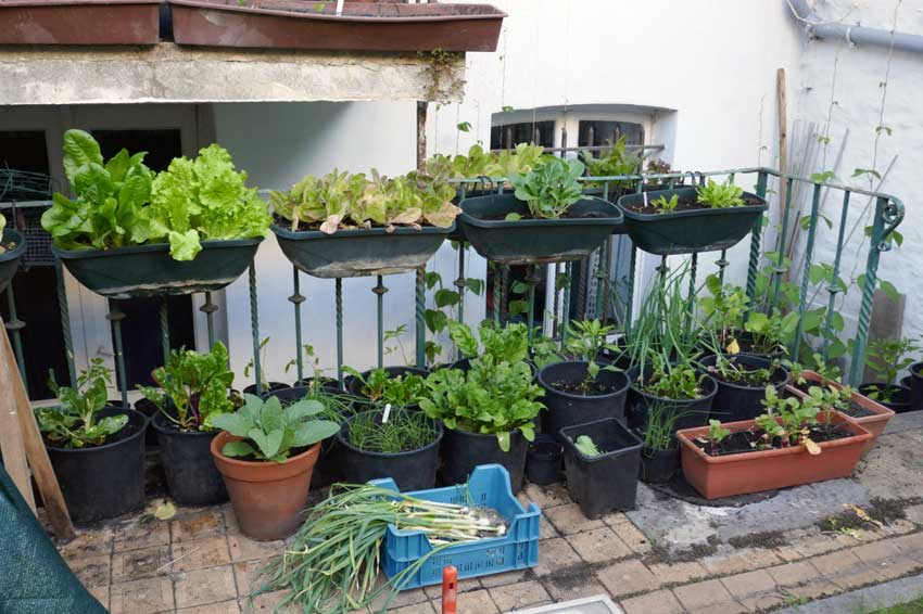 Switching to summer, pots full of salad