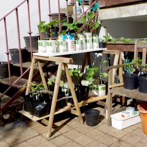 Outdoors ready for planting out