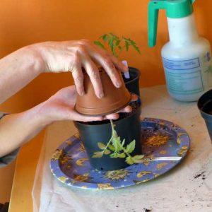 Inverse pot