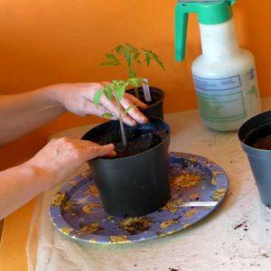 Fit into larger pot