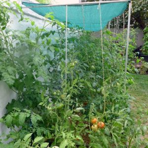 String support for tomatoes