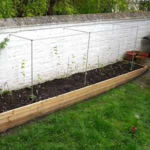 Plant support frame