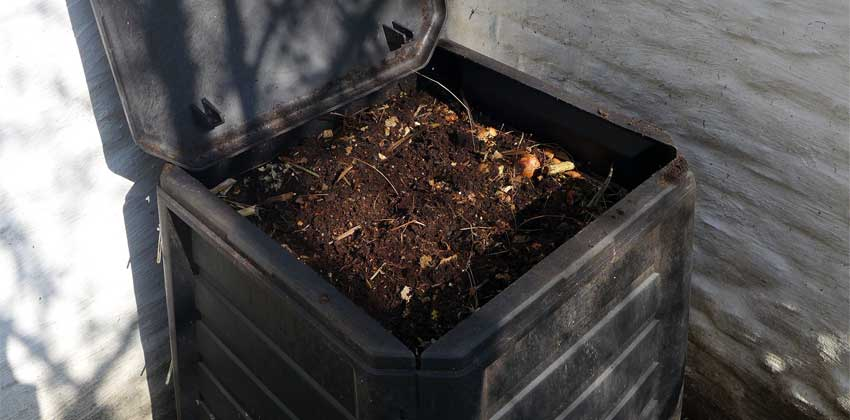 Compost - Growing Soil