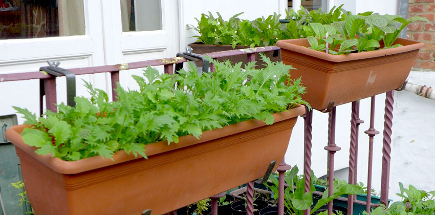 Balcony farming featured