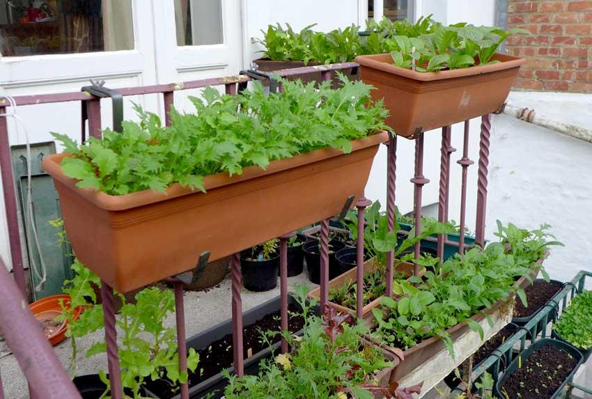 Balcony farming