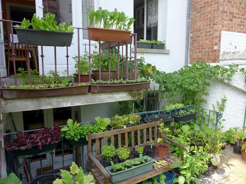City salad garden