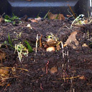 Mix of kitchen and garden waste