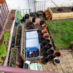 Containers need a good compost mix