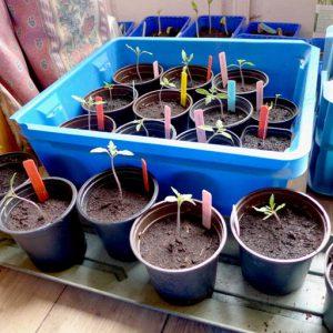Starter pots