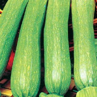 Courgette Genovese