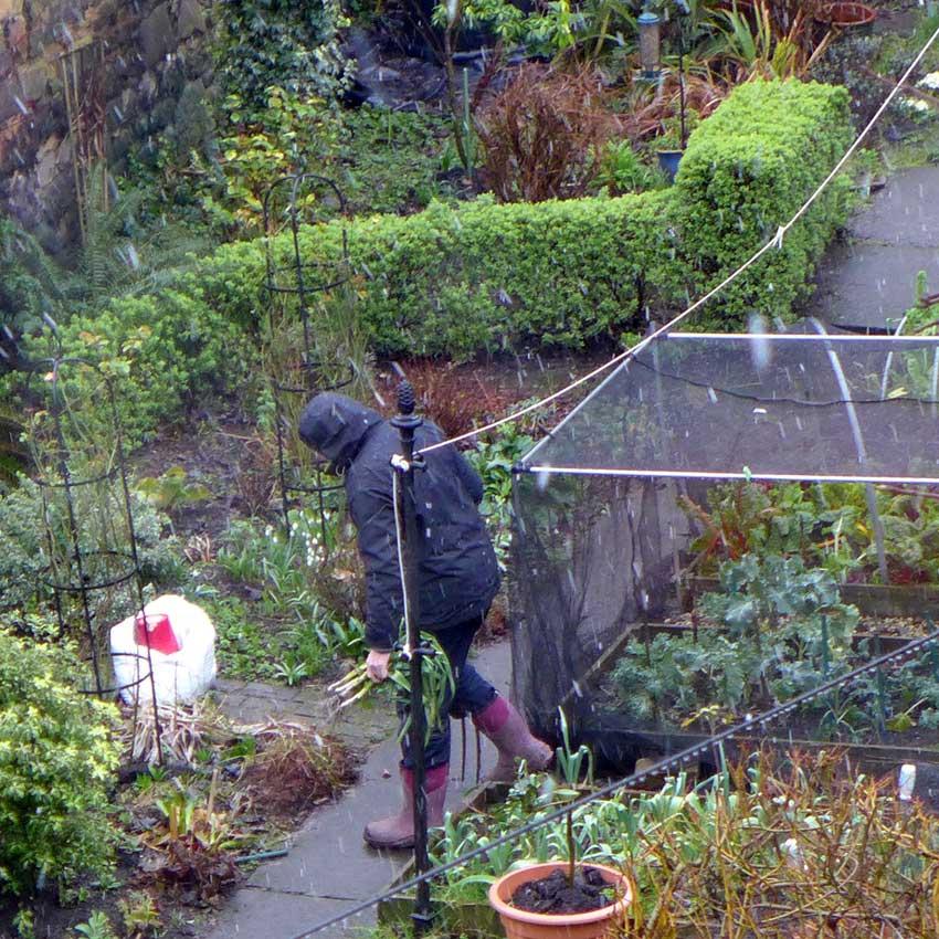 Anne's Garden - Scottish Garden Visit 2 - Anne
