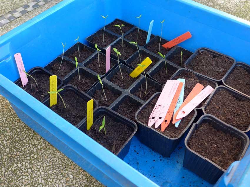 Planting list - week ending 28 Feb 2016