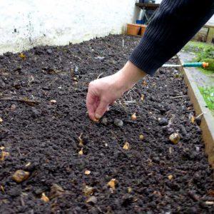 Direct planting